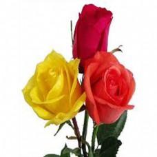 1 - 11 Roses