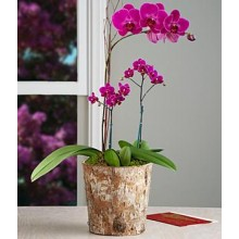 Passion for Purple Orchid Garden