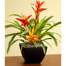 Tropical Bromeliad Garden