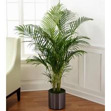 The Palm Plant