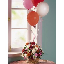balloons with 1 basket assorted daisies