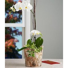 Elegant White Orchid Garden