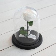 FOREVER WHITE ROSE IN GLASS DOME