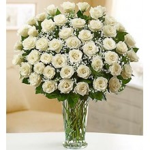 48 Long Stem white Roses