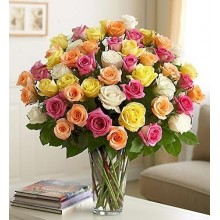 Four Dozen Premium Assorted Roses in Vase