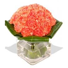 20 Orange Carnations