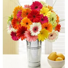 Happy Gerbera Daisies 20 Stems
