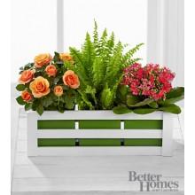 Spring Surprises Plant Trio