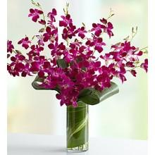 Orchid Embrace
