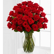 Five Dozen Premium Red Roses