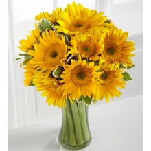 Endless Summer Sunflower -12 Stems