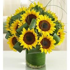 Sun-Sational Sunflowers-12 Stems