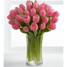Pink Prelude Tulip Bouquet - 24 Stems