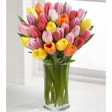 Rush of Color Assorted Tulip - 24 Stems